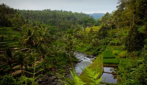 Indonesische Flora